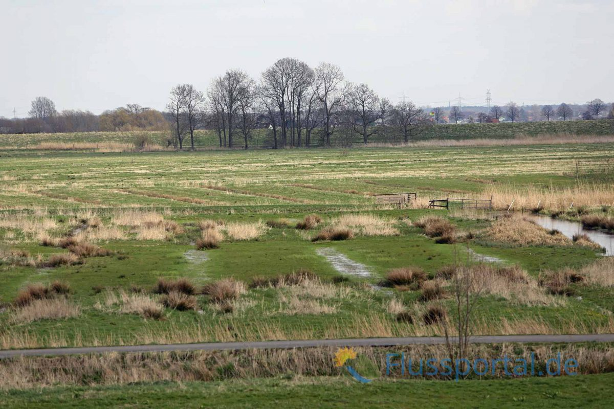 Grünlandgebiete unter Tideeinfluss am Sturmflutsperrwerke der Stör bei Glückstadt