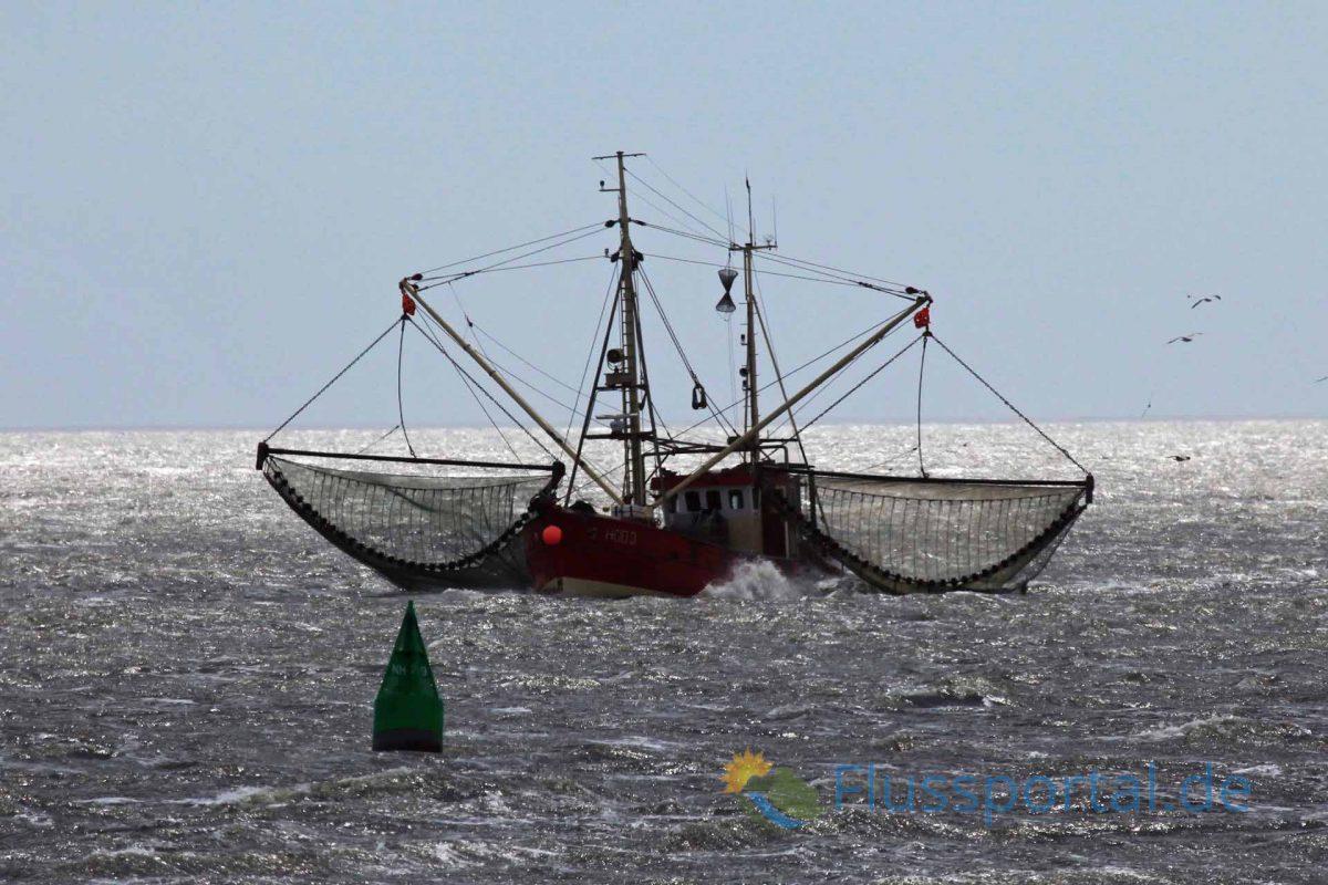 Friedrichskoog verfügte lange Zeit über die meisten registrierten Krabbenkutter an der Nordseeküste