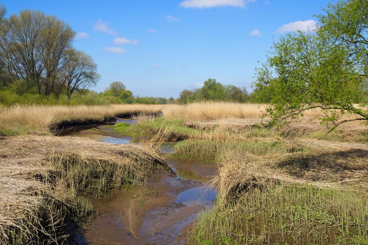 "Das Süßwasserwatt – Blick ins Naturschutzgebiet ""Heuckenlock"" an der Elbe bei Ebbe"
