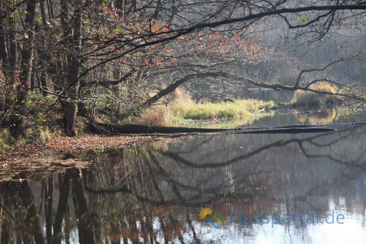 Die Ammersbek ist der erste große Nebenfluss, der die Alster erreicht