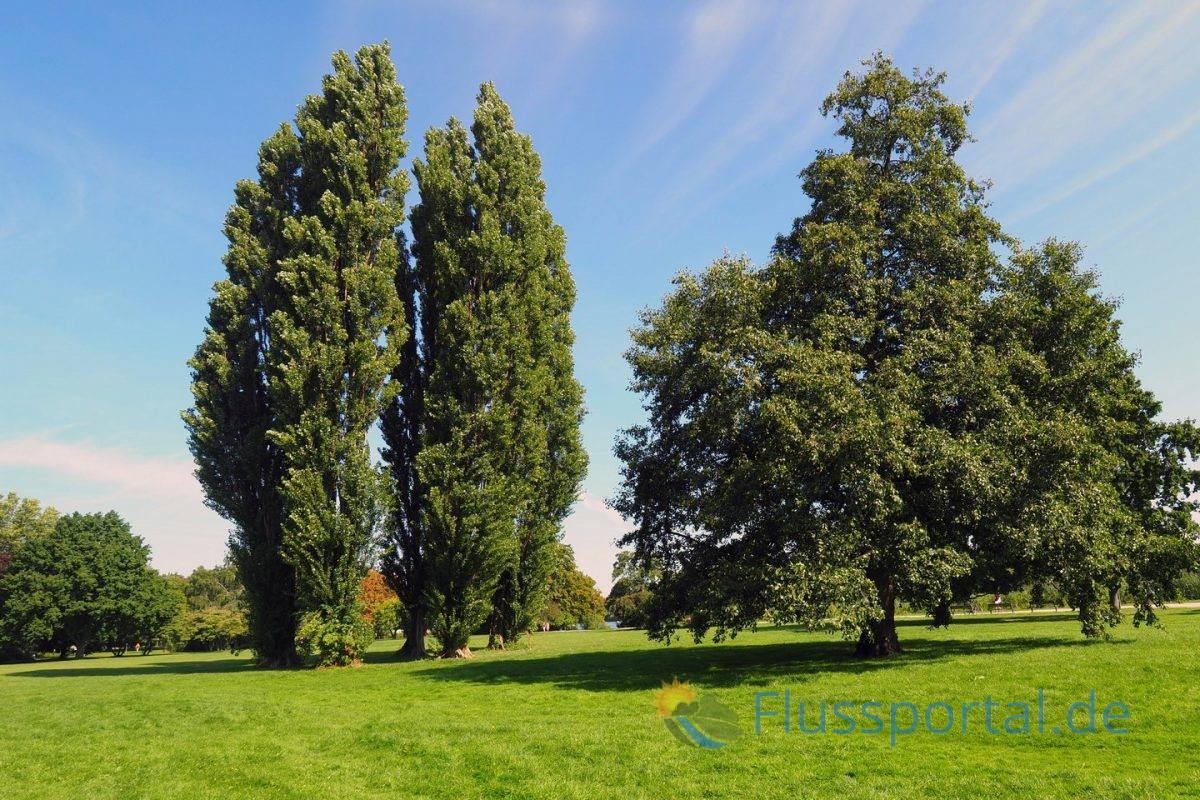 Vor den Villen Harvestehuder Weges breiteten sich heute lichte Wiesenflächen bis zum Teich und Ufersaum aus.