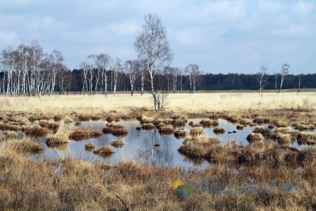 Der Duvenstedter Brook ist das größte Hamburger Naturschutzgebiet