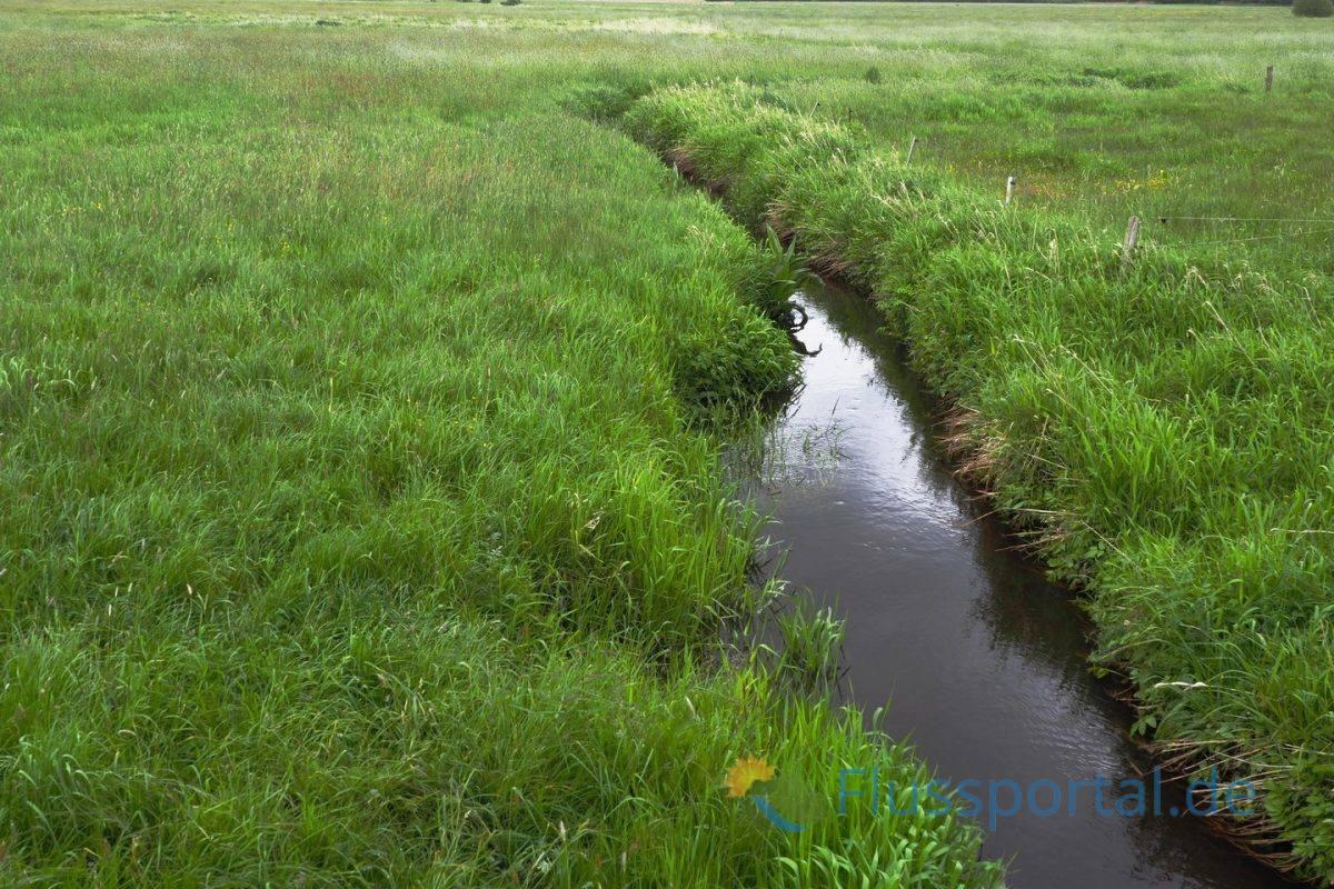 Die Alster durchquert - wenige hundert Meter nach ihrer Quelle - die riesige Fläche des rund 907 Hektar großen Naturschutzgebietes der Oberalsterniederung