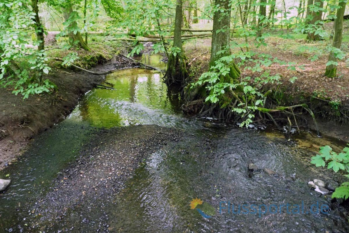 Die Rodenbek ist Namensgeber des Naturschutzgebietes Rodenbeker Quellental